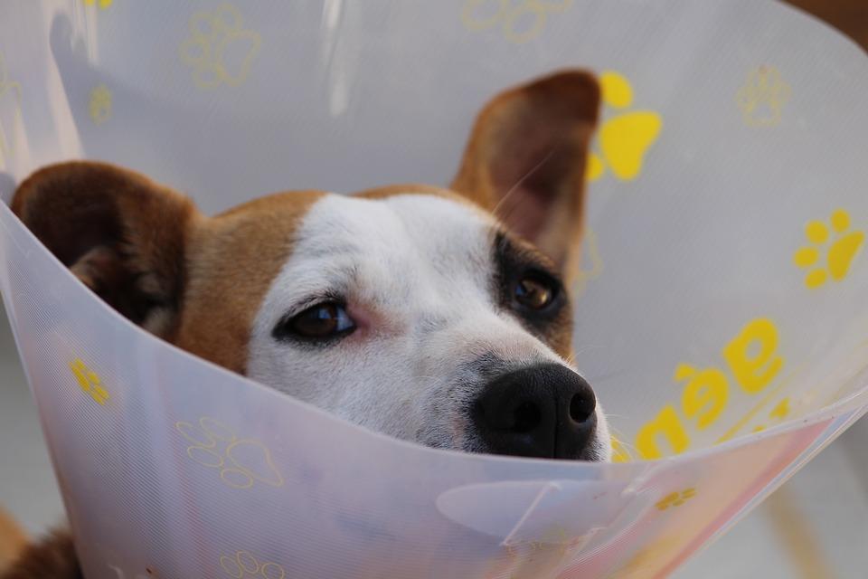 Vétérinaires en France